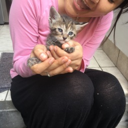 adopcion gatito